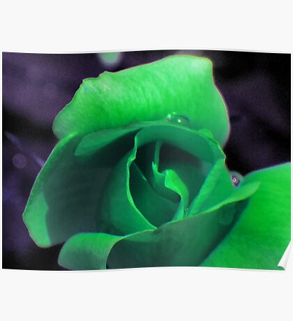Green Rose Poster