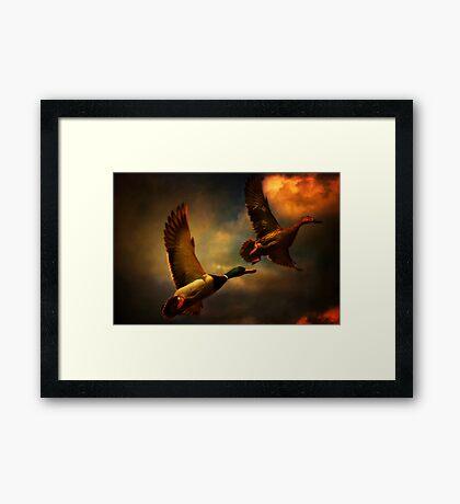 Flying Ducks Framed Print