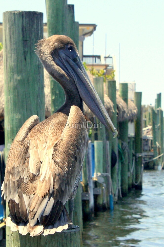 Pelican On A Post by AuntDot