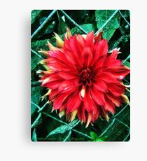 Unfettered Canvas Print