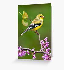 American Goldfinch in Spring Season Greeting Card
