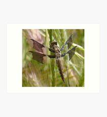 Black dragonfly Art Print