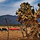 Red Truck - Jalisco by Lynnette Peizer