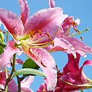 Lily Flowers art prints Summer Pink Lilies Baslee Troutman by BasleeArtPrints