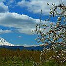 Fruit Loop Landscape by Nick Boren