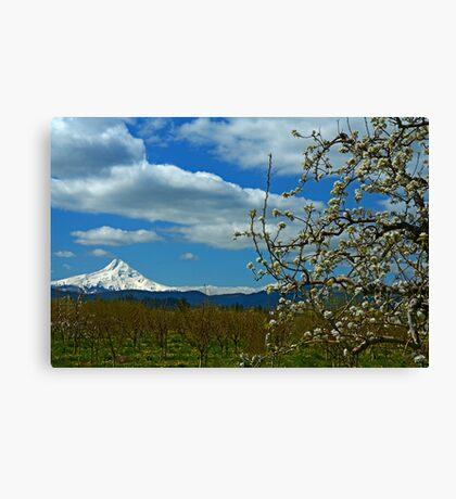 Fruit Loop Landscape Canvas Print