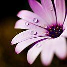 Droplets by StephanieAnn88