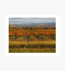 Across the vineyards just before sunset. Art Print