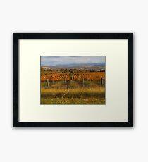 Across the vineyards just before sunset. Framed Print