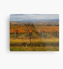 Across the vineyards just before sunset. Metal Print