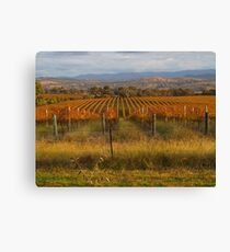 Across the vineyards just before sunset. Canvas Print