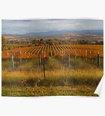 Across the vineyards just before sunset. Poster