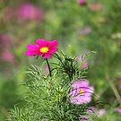 Winterbourne pink bokeh by John Dalkin