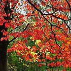 Autumn in Mount Beauty by helmutk
