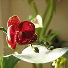 Purple orchid on windowsill by RKLazenby