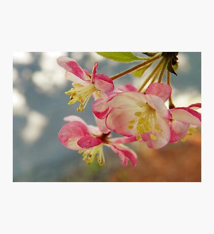 Full of Light Photographic Print