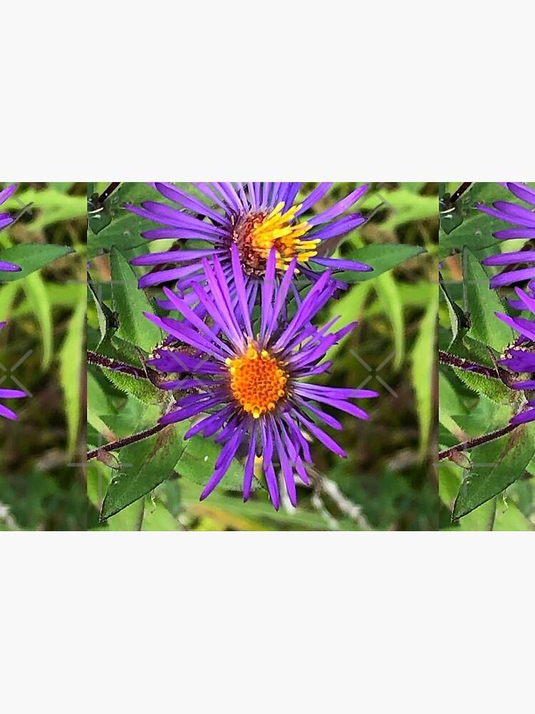 Purple flowers, autumn flowers, flowers by PicsByMi
