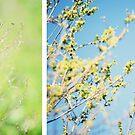 Spring mood by dhmig