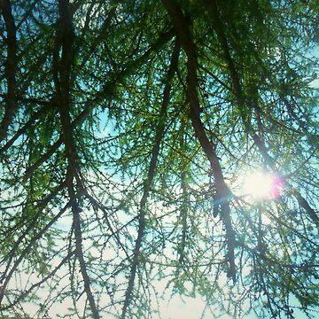 Luz solar filtrada de Fix-it-Fran