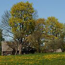Spring in old farmstead 2  (Yellow trees) by Antanas