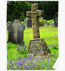 Bluebells in a graveyard, Dartmoor, UK  Poster