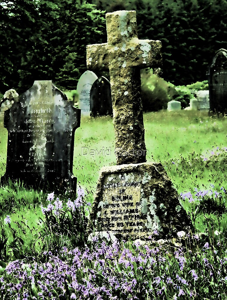 Bluebells in a graveyard, Dartmoor, UK (Altered by design) by David Carton