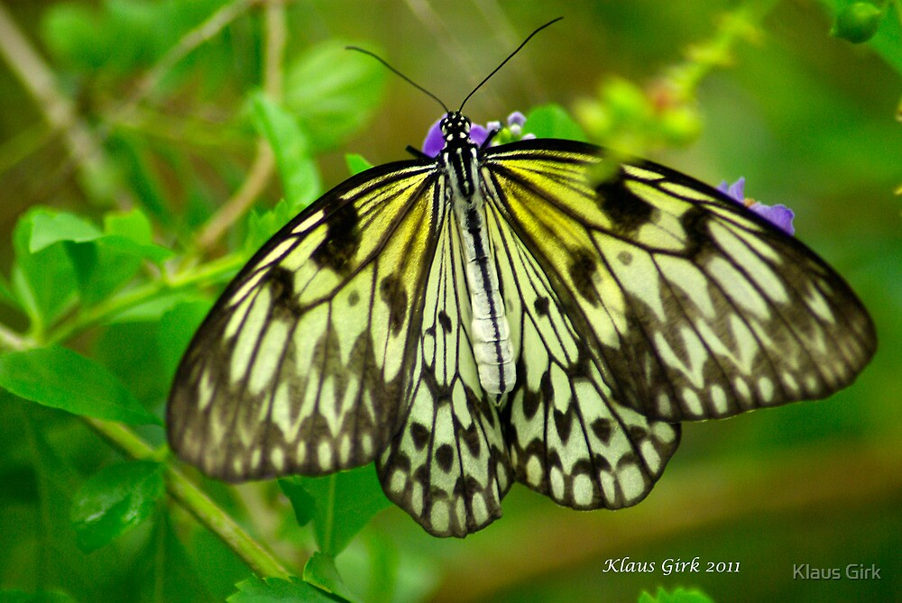 Paper Kite Butterfly by Klaus Girk