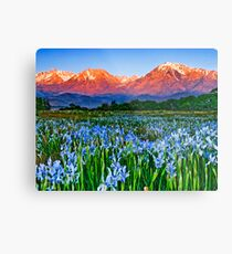 Iris Sunrise Metal Print