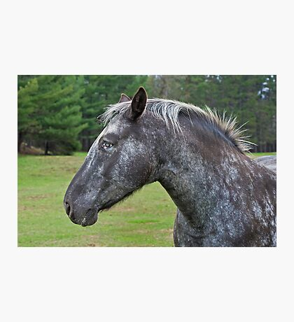 Other Horse Photographic Print