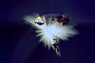 Parachute Jump by Eve Parry