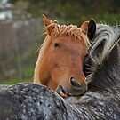 Horse Hug by Daniel  Parent