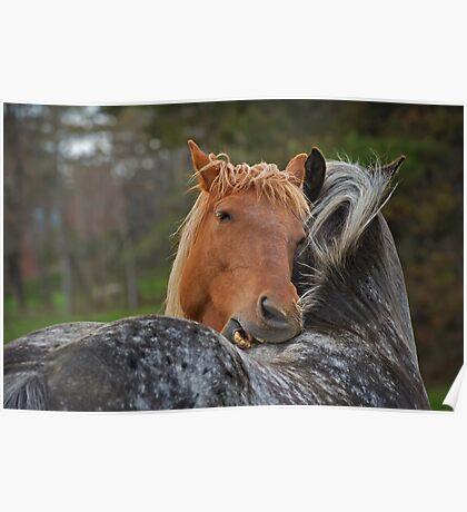 Horse Hug Poster