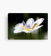 Lienzo Fading Flower
