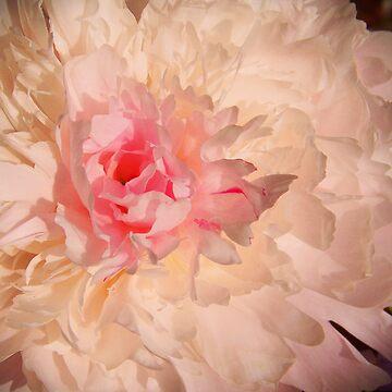 Flower feed the Soul by sunilbhar