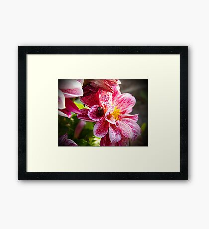 Flowers really do intoxicate me. Framed Print