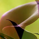Calla Lily _ Collage by Shubd