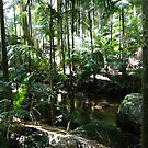Mount Tamborine Rain Forest and stream by medley
