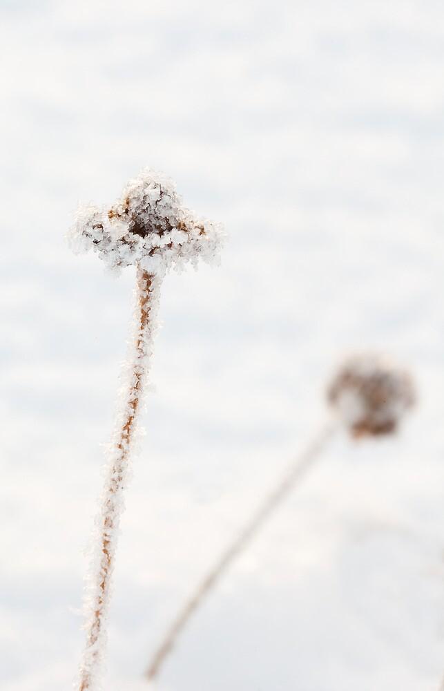 Frozen Stem by Platslee