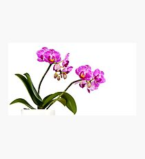 Tropical Blooms Photographic Print