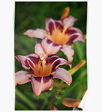 Daylilies Poster