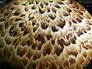 Dryads Saddle (Polyporus squamosus) by Marcia Rubin