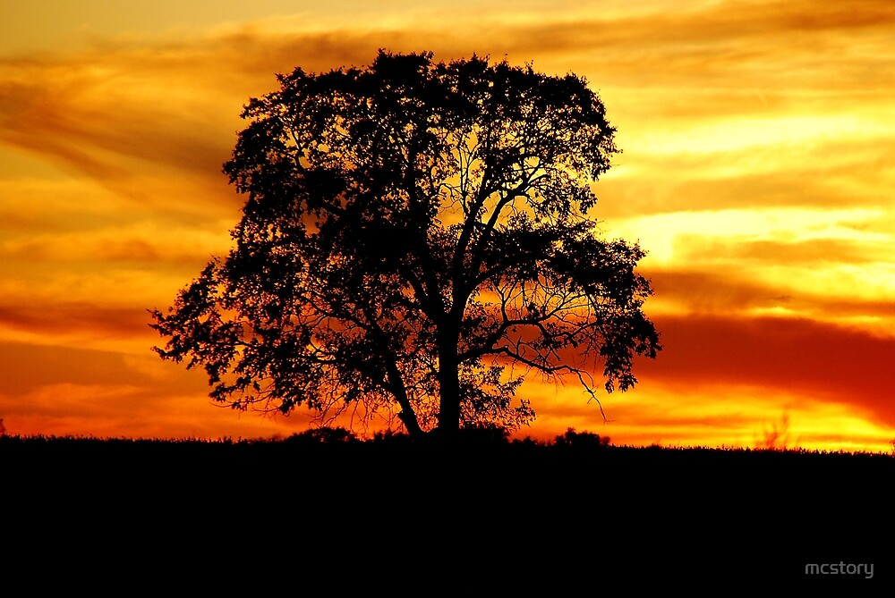 Lone Tree by mcstory