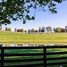 Kentucky Horse Farm by mcstory