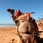 camel on the beach in morocco by milena boeva