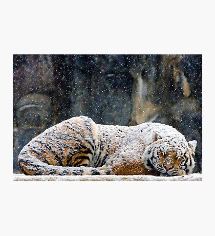 Warm Coat Photographic Print
