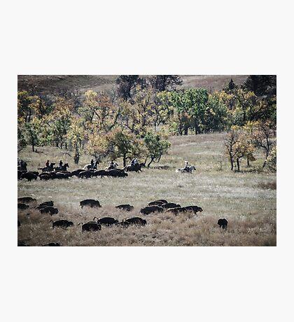 Buffalo Roundup 2 Photographic Print