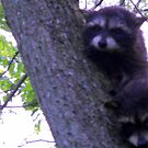 Baby Racoons in the Tree by debbiedoda