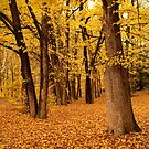 Autumn Queen's Kingdom by Becca7