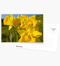 Golden Yellow Daffodil Flower Meadow art Baslee Troutman Postcards