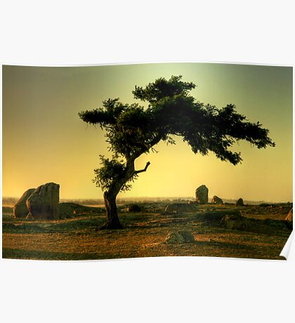 Late Afternoon Light at Dog Rocks Poster